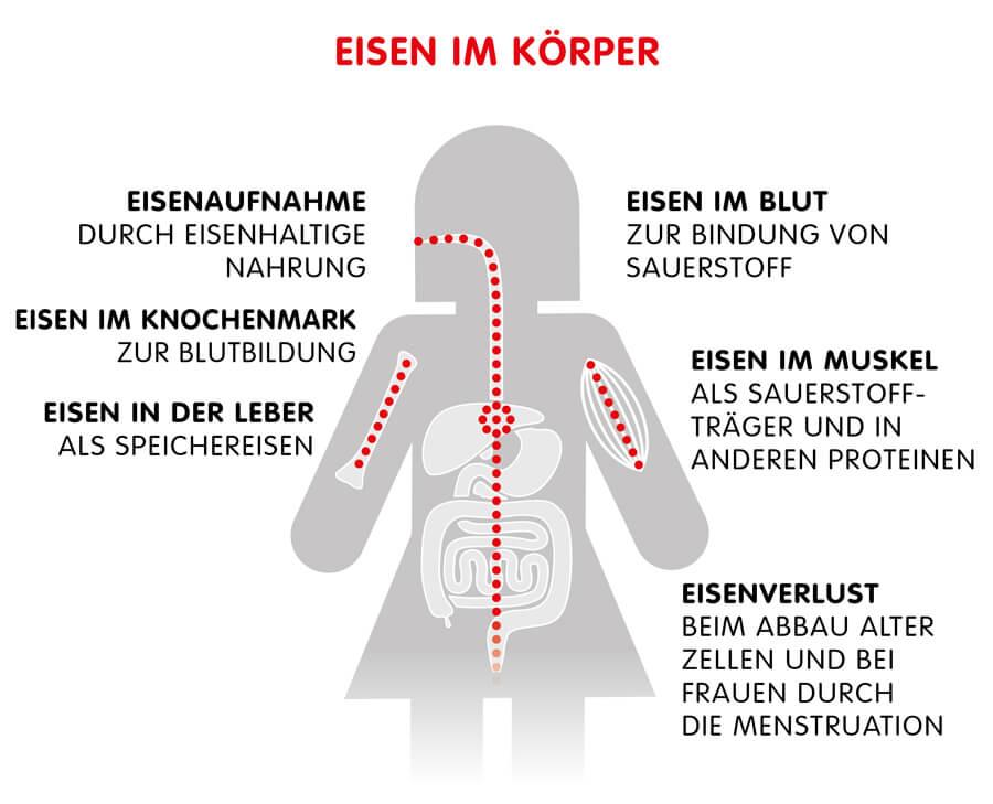 Infographik: Übersicht Eisen und seine Wirkung im Körper