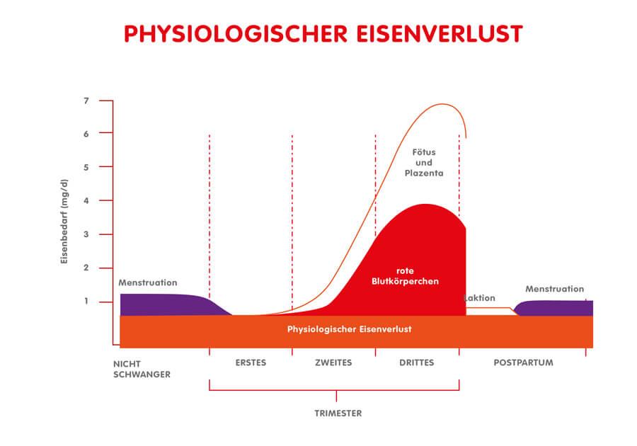 Infographik: Physiologischer Eisenverlust und Eisenbedarf im Verlauf der Schwangerschaft